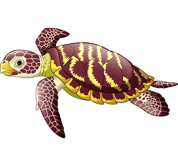 cartoon sea turtle isolated on white