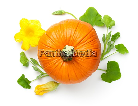 pumpkin vegetable with yellow flower
